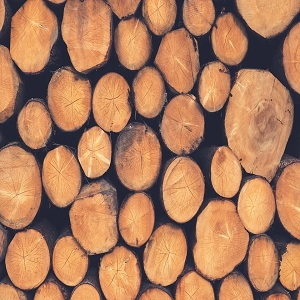 Importance Of Quality Timber Supplies